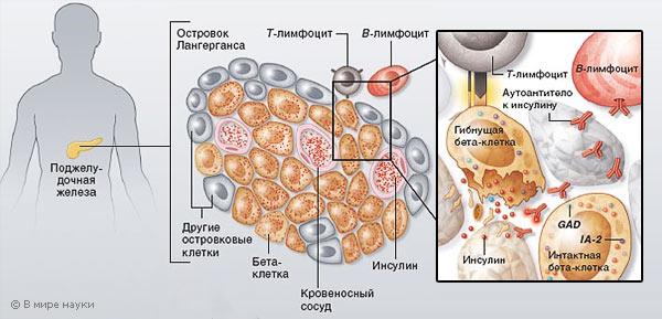 Анализ крови гады