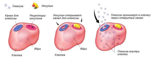Нормы инсулина воз